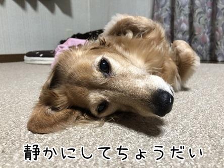 kinako10627.jpeg