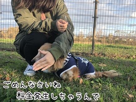 kinako10633.jpeg