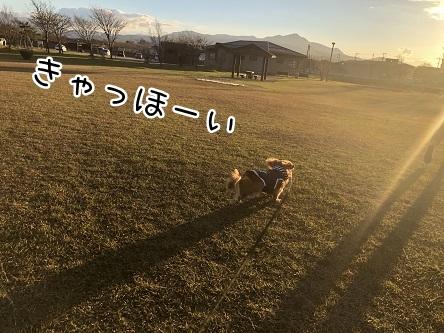 kinako10634.jpeg