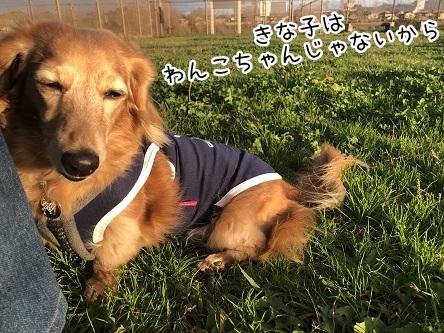 kinako10642.jpeg