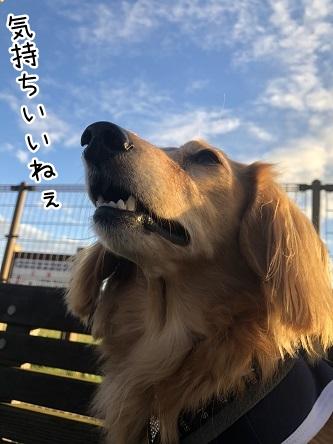 kinako10643.jpeg