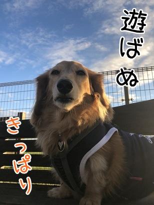 kinako10644.jpeg