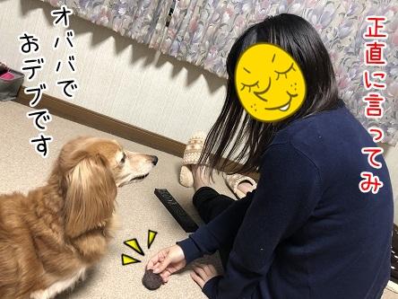 kinako10656.jpeg