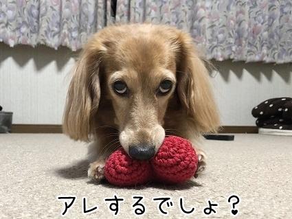 kinako10659.jpeg