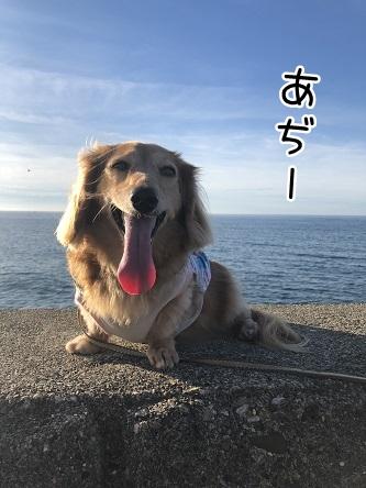 kinako10672.jpeg