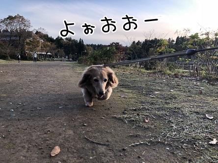kinako10676.jpeg
