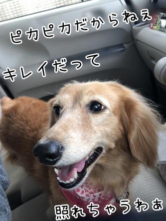 kinako10682.jpeg
