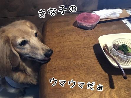 kinako10683.jpeg