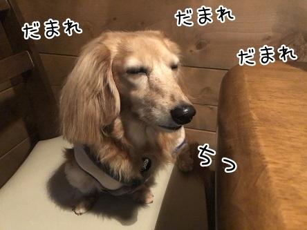 kinako10688.jpeg