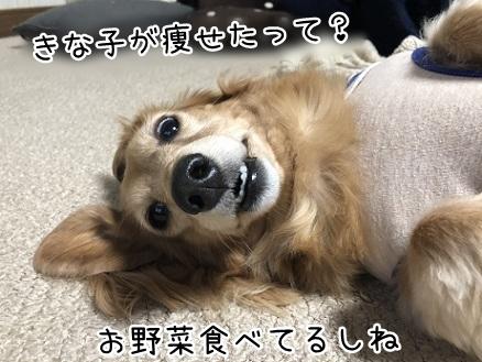 kinako10692.jpeg