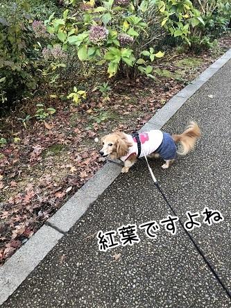 kinako10696.jpeg