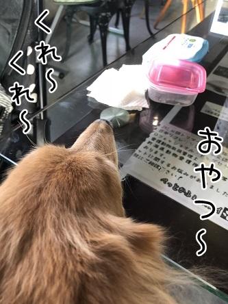 kinako10702.jpeg