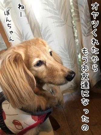 kinako10721.jpeg