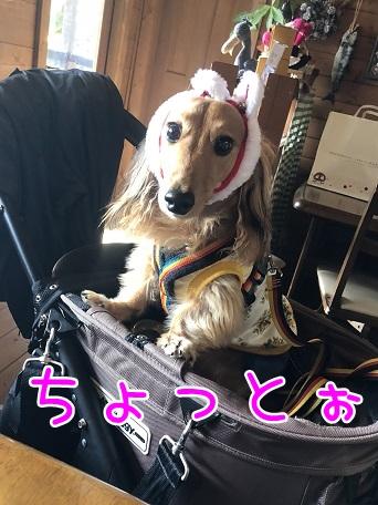 kinako10723.jpeg