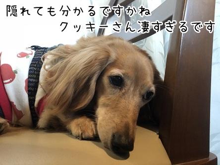 kinako10737.jpeg