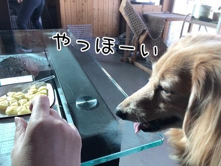 kinako10739.jpeg