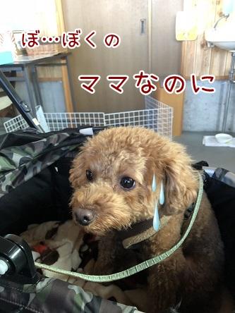 kinako10743.jpeg