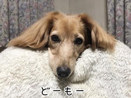kinako10752.jpeg