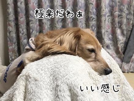kinako10753.jpeg