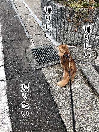 kinako10766.jpeg