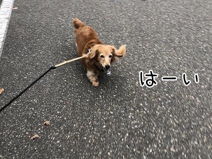 kinako10767.jpeg