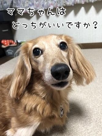 kinako10778.jpeg