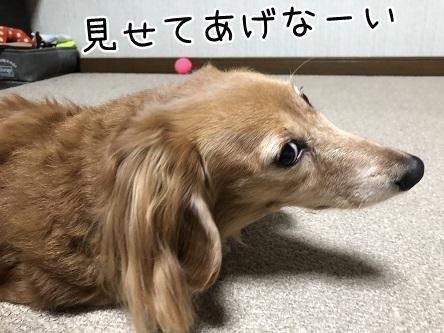 kinako10781.jpeg