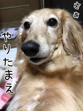 kinako10793.jpeg