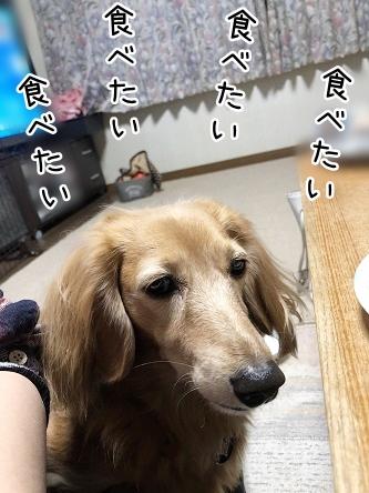kinako10803.jpeg
