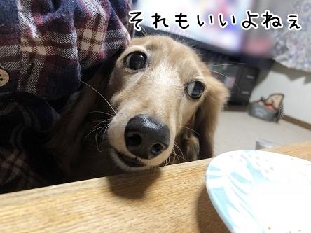 kinako10804.jpeg