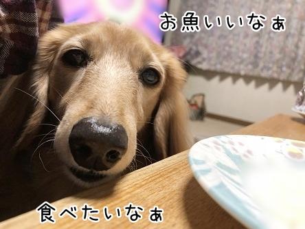 kinako10805.jpeg