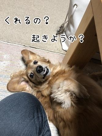 kinako10806.jpeg