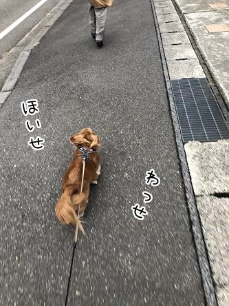 kinako10814.jpeg