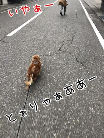 kinako10817.jpeg