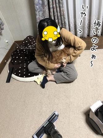 kinako10822.jpeg