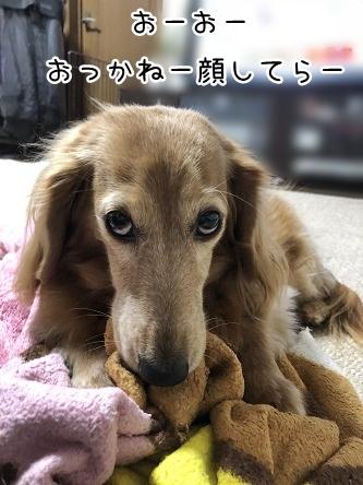 kinako10843.jpeg