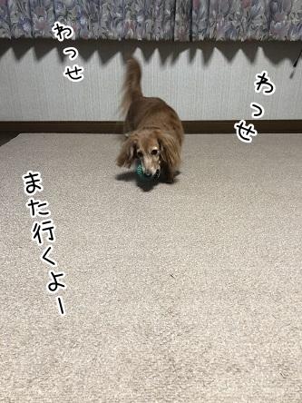 kinako10846.jpeg