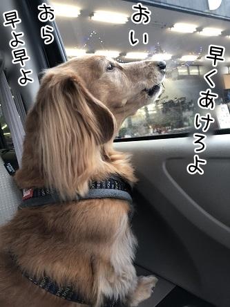 kinako10853.jpeg