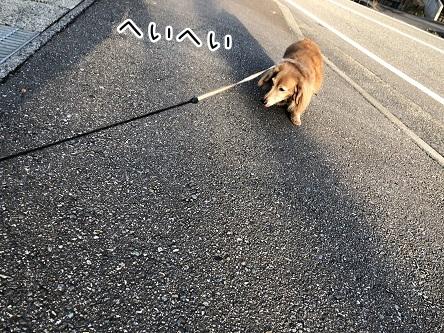 kinako10856.jpeg
