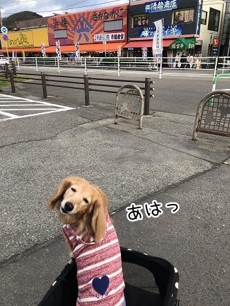 kinako10862.jpeg