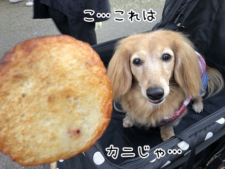 kinako10864.jpeg