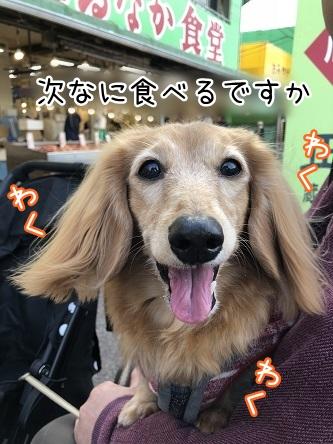 kinako10865.jpeg