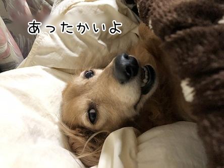 kinako10896.jpeg