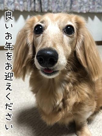 kinako10914.jpeg