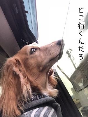kinako10933.jpeg