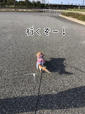 kinako10939.jpeg