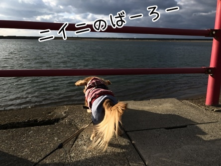kinako10942.jpeg