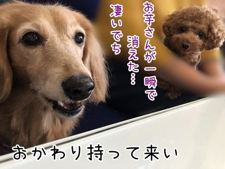 kinako10964.jpeg