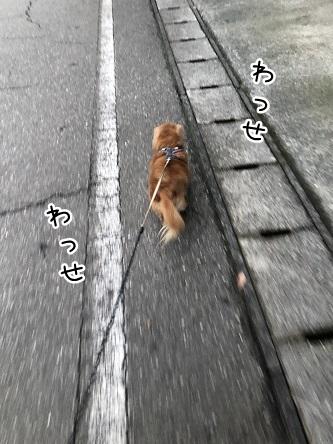 kinako10967.jpeg