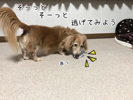 kinako10976.jpeg